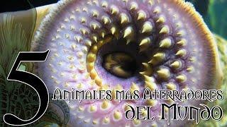 Top 5 Animales mas ATERRADORES del Mundo    RPNety