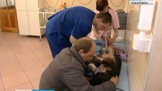 Вести-Хабаровск. Травля собак