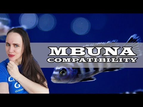 What Are Mbuna Compatible With?