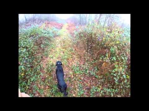 chasse-bécasse-2015-2016-(setter-gordon)