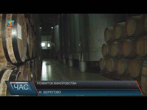 Розвиток виноробства