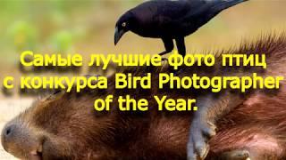 Лучшие фото птиц с конкурса Bird Photographer of the Year.