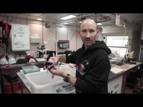 John Pogonoski of CSIRO talks about the Lizard Fish