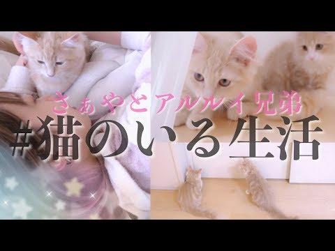 飼い主の事が好きすぎる兄弟子猫とさぁやのモーニングルーティン♡【アルルイ】