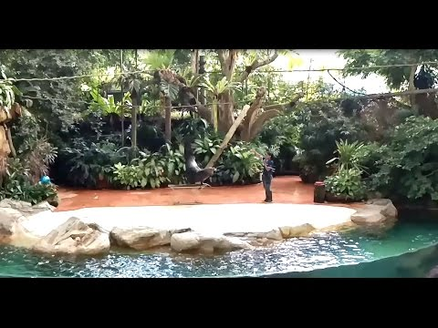 Splash Safari Show: Sea lion performance at Singapore zoo