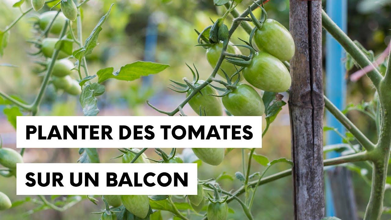 Planter Des Tomates Sur Son Balcon