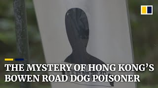 The mystery of Hong Kong's Bowen Road dog poisoner