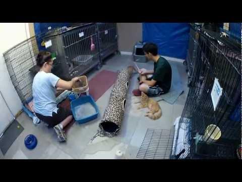 No kill animal shelter, Phoenix/Scottsdale