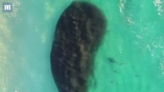 khoảnh khắc hàng trăm con cá mập khổng lồ lởn vởn ngay cạnh nhóm học sinh đi bơi