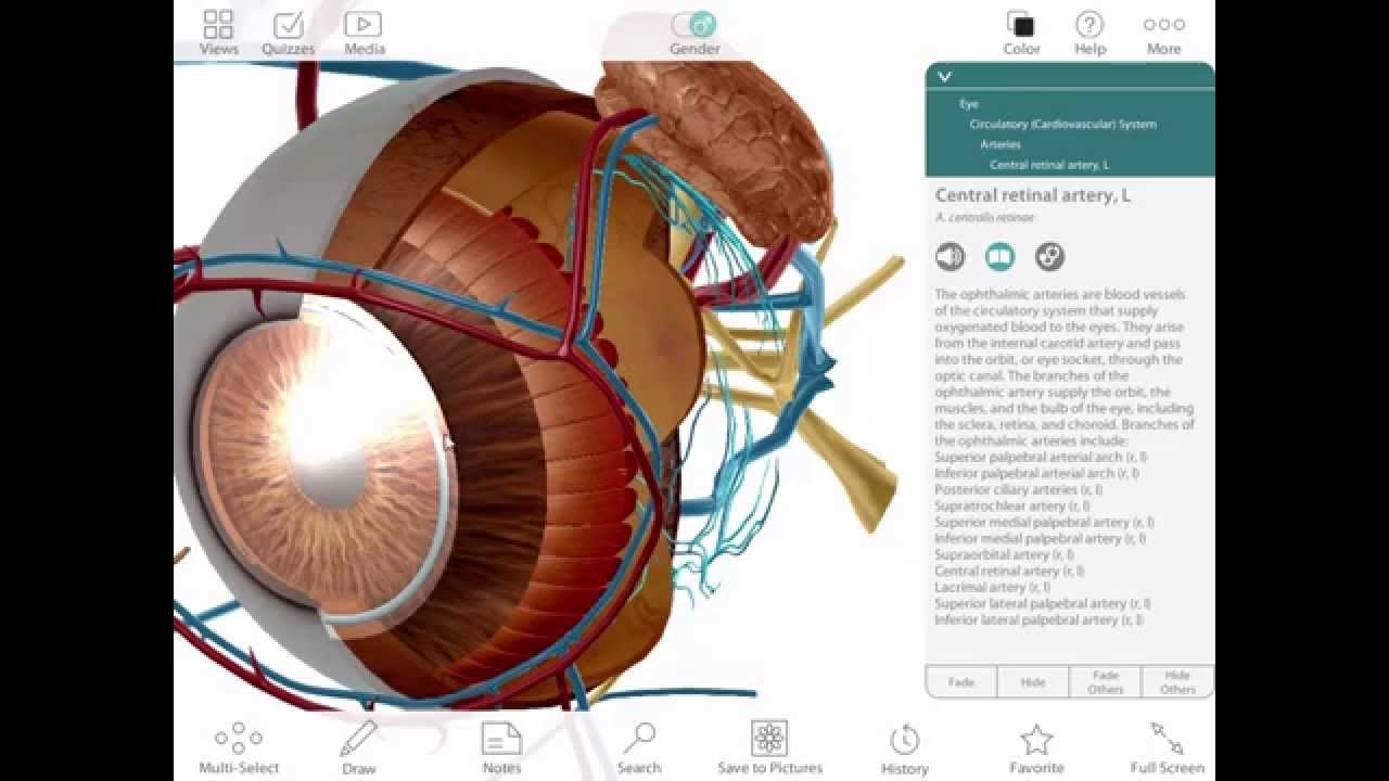 The case for 3D anatomy software in lecture and lab - YouTube