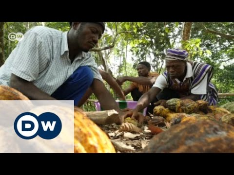 Sierra Leone: How cacao protects the environment   DW English