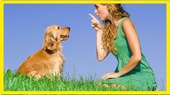Taube Hunde erziehen: So gelingt es
