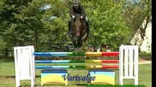 Horses - Starstrukk