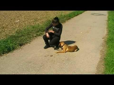 unbedingt anschauen Mein Hund, der Allesfresser ! (Hundeerziehung, Hundeschule, Training, Hunde)