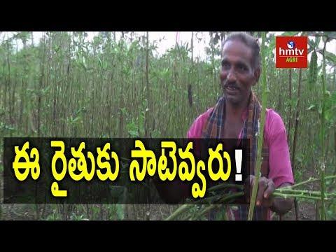 Mixed Cropping | Natural Farming | hmtv Agri