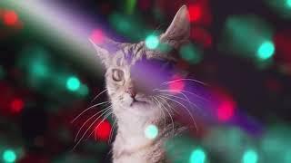 Коты поют:3