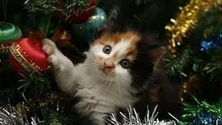 Прикольное видео с кошками!Кошки и Новогодняя Елка!Безобразники!(Смешное видео с кошками!Хорошее настроение Вам подарит подборочка Коты и Новогодняя Елка! Обязательно..., 2016-02-05T12:22:35.000Z)