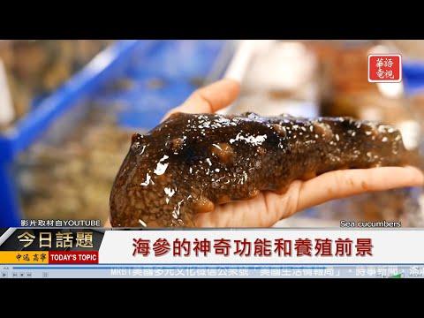 海參的神奇功能和養殖前景 01202020
