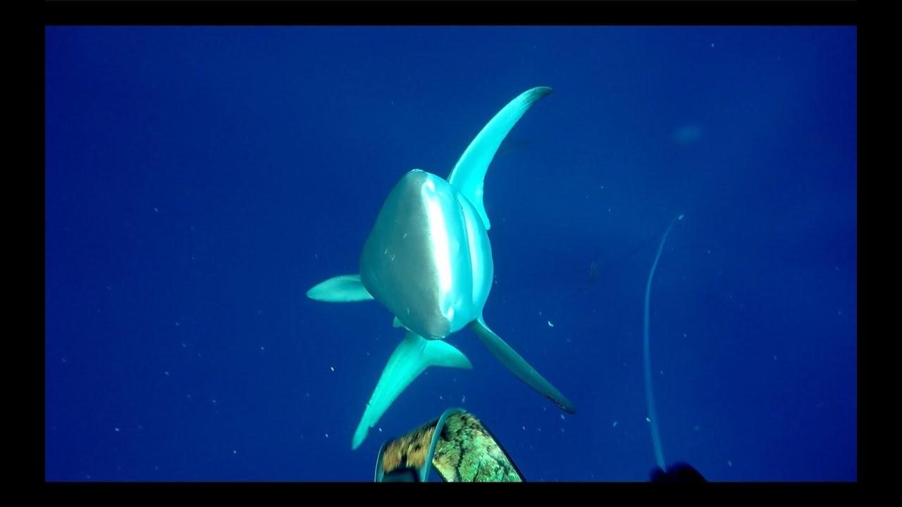 Shark attack at Ascension Island!