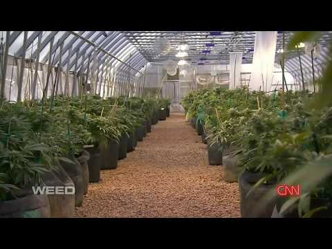 Weed   CNN Special Dr Sanjay Gupta 2013 Documentary Full English  1080p HD  H264 AAC 720p