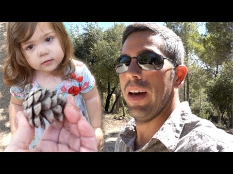 LOST In A Remote Forest In Israel