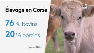 La filière viande en Corse : peu de production par rapport au nombre d'exploitants