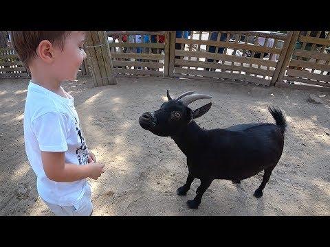 NA JAULA DO ZOOLÓGICO COM A CABRA!! Zoo Aquarium de Madrid Espanha - Daily Vlog em Familia e Animais