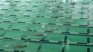 2014-15新界區小學界游泳比賽女甲50背泳決賽