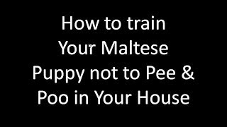 Maltese Puppy Potty Training- Potty Training Malteses Puppies - Free Mini Course Potty Training Malt
