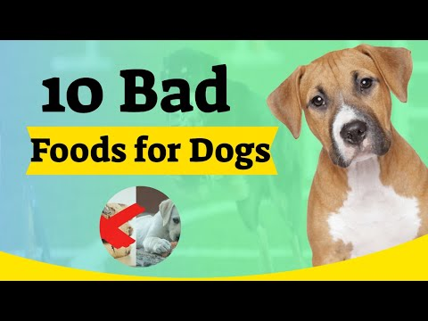bad-foods-for-dogs---10-harmful-foods-your-dog-shouldn't-eat