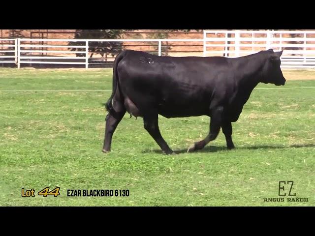 EZ Angus Ranch Lot 44