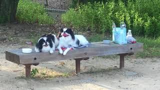 毎朝いつもの公園でラジオ体操していてみらいとまろはおとなしく待って...