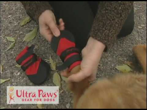 How to properly put on and use Ultra Paw dog boots.