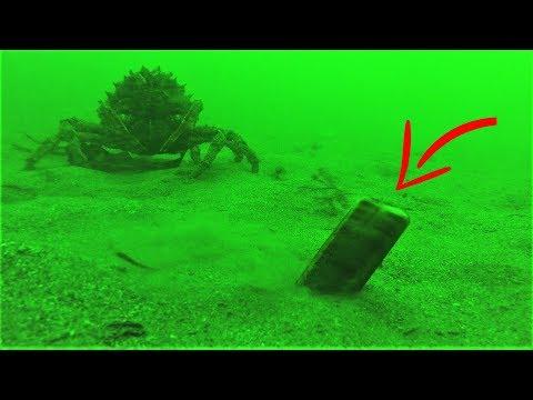 Salting Razor Fish / Clam Burrows Underwater