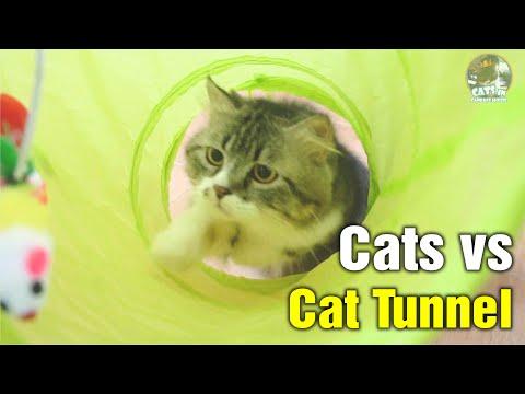 Cats Vs Cat Tunnel