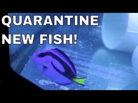 new saltwater fish need to be quarantined