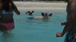 SWIMMING WITH PIGS, EXUMA PD