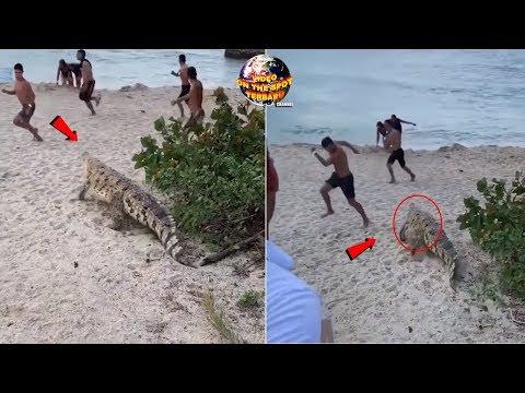 Pengunjung Pantai Kocar-Kacir Berhamburan! Saat Buaya Besar Tiba² Mucul Dari Semak²!!