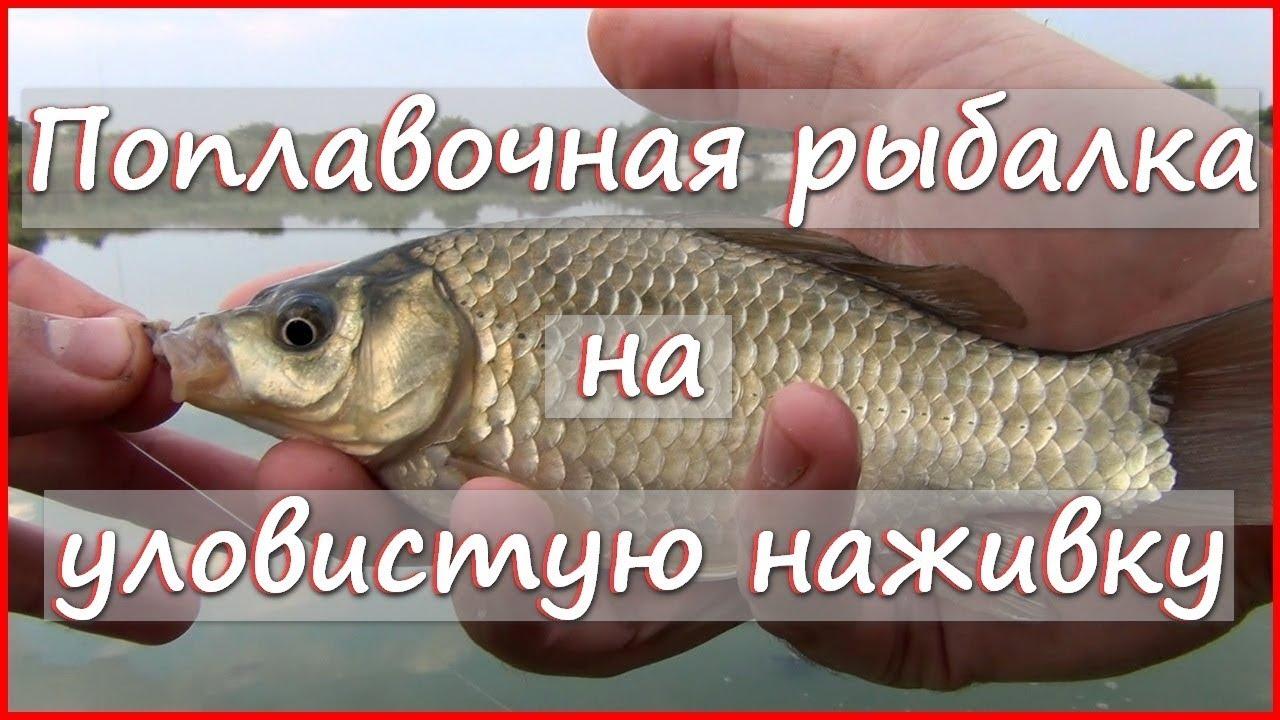 Универсальная УЛОВИСТАЯ наживка ? Рыбалка на поплавочную удочку на УЛИТКУ