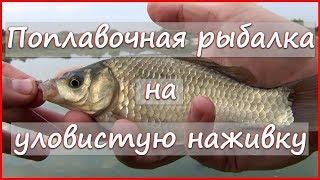Универсальная УЛОВИСТАЯ наживка 🐚 Рыбалка на поплавочную удочку на УЛИТКУ