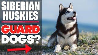 Are Siberian Huskies GOOD GUARD DOGS?  (HUSKY K9 SECURITY TIPS)