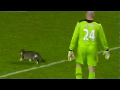 Кот на матче тоттенхэм