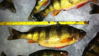 ice fishing with a vexilar flx 28