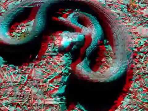 3D Film - Snake in attack