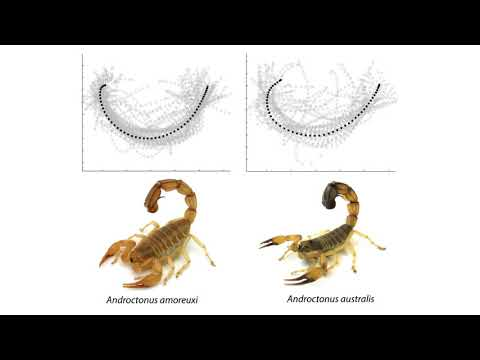 To know a scorpion by its tail: the tail strike of scorpions differs between species