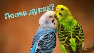 Забавное ПОПУГАЙ ШОУ. Попугаи поют, танцуют, читают стихи, пародируют