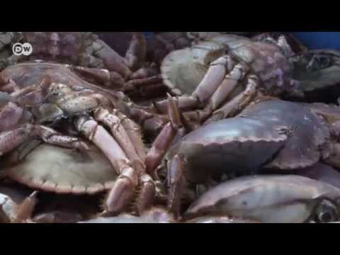 Recycling Seafood - Oil From Fish Waste | Tomorrow Today