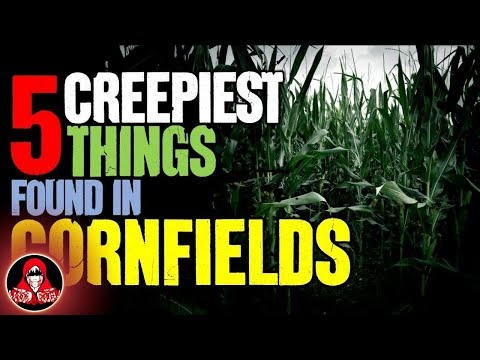 5 Creepiest Things Found in Cornfields