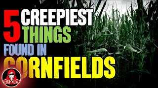 5 Creepiest Things Found in Cornfields - Darkness Prevails