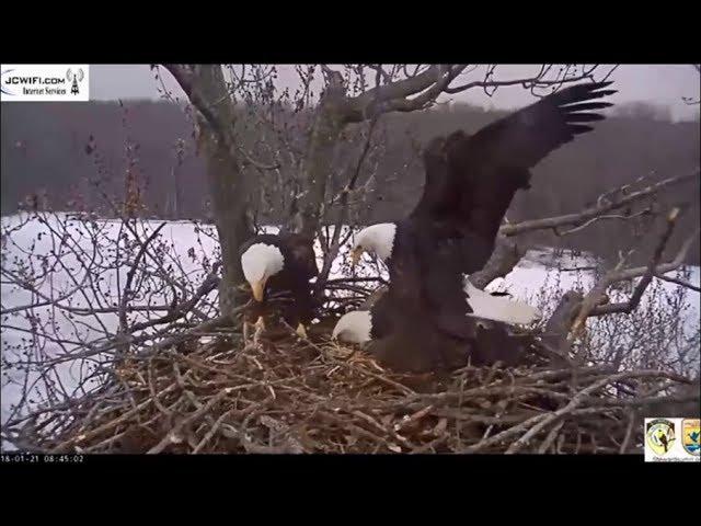 trio-eagle-nest-stewards-umrr-trio-mating-valor-2-prevails-1-21-18